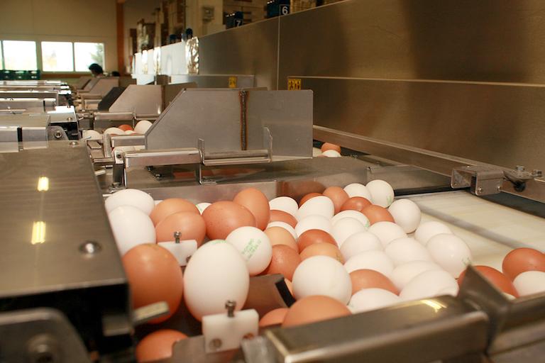 Фипронил в яйцах