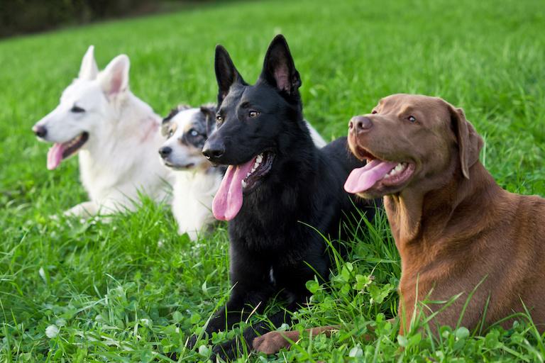 Собаки в Швейцарии